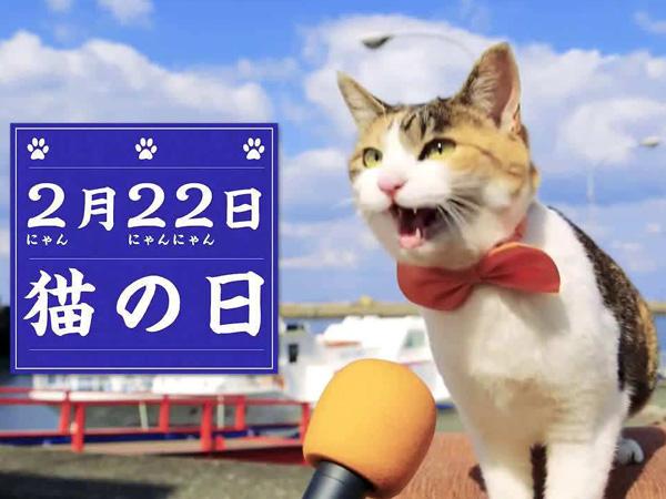 """猫猫数量是岛上居民6倍,日本""""猫岛""""意外走红并吸引大批游客"""