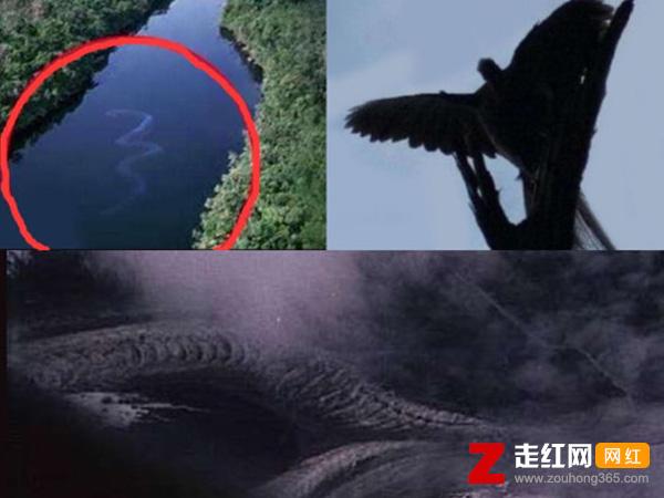 卫星拍到的真龙凤凰,图片背后的真相让人意外